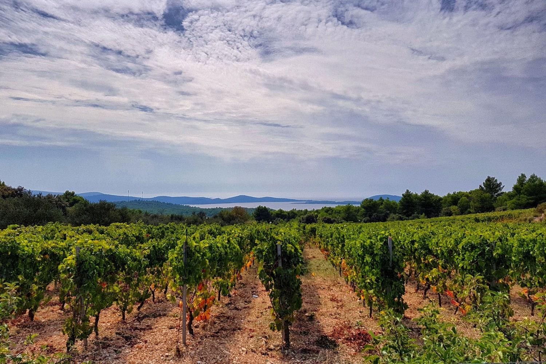 Saša Spiranec: Dalmatian Wine Regions