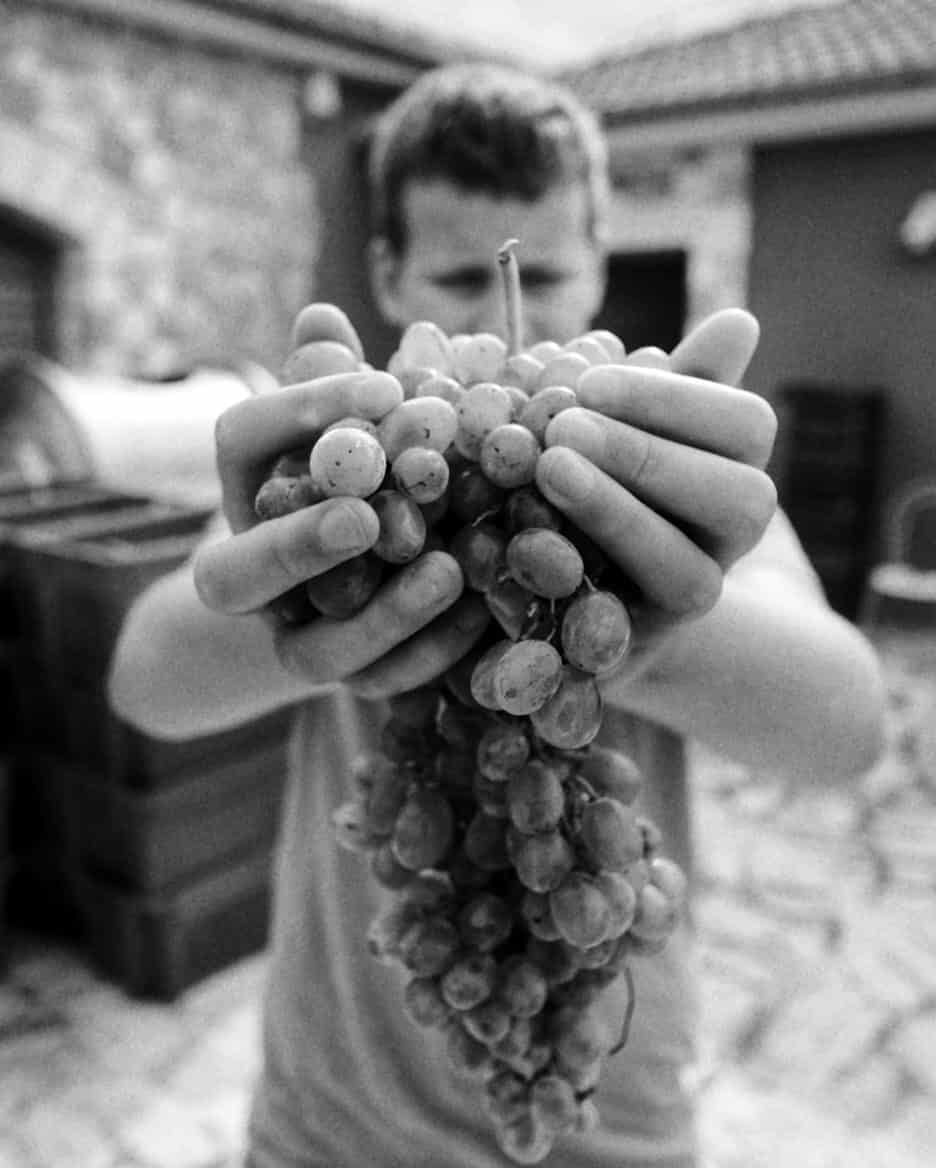 Leon holding pošip grapes